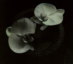 Corpse Flower album cover