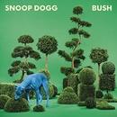 BUSH album cover