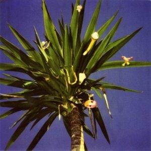 Zopilote Machine album cover