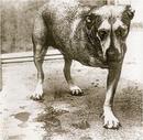 Alice In Chains album cover