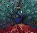 Sorceress album cover