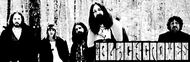 The Black Crowes image